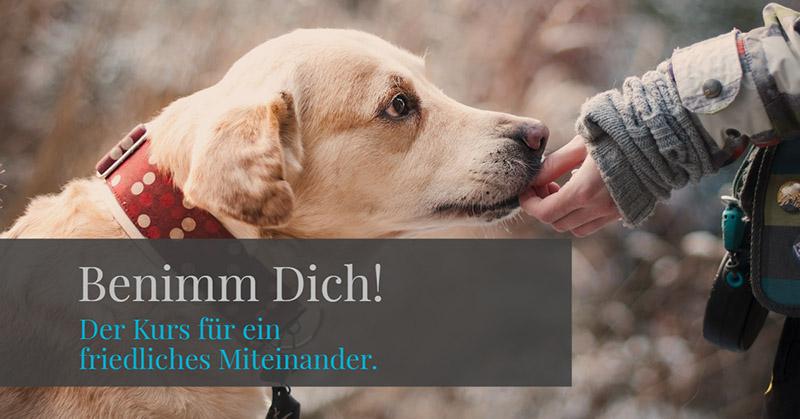 hunde-neu-verstehen-benimm-dich